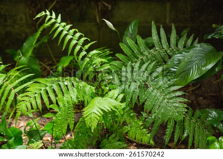 Green ferns in tropical forest in close up - stock photo