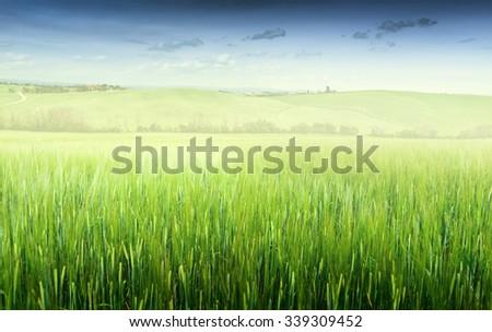 Green field and blue sky. Italy,  - stock photo