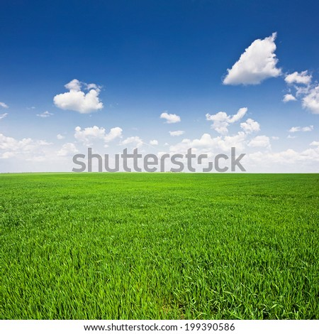 green field and blue sky. Landscape - stock photo