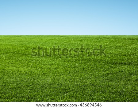Green field and clean blue sky,green fresh grass - stock photo