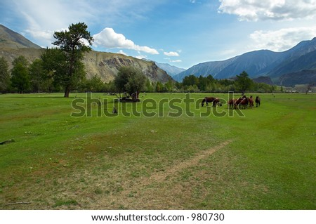 green field and horses, Altay - stock photo
