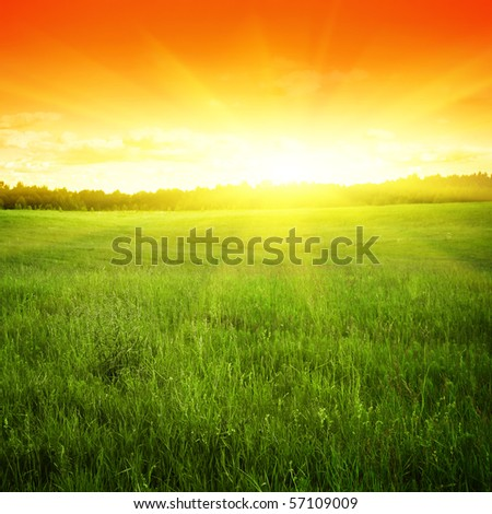 Green field and sunset.