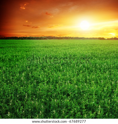 Green field and sunset sky. - stock photo