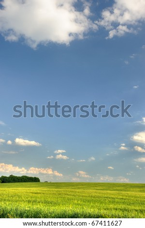 Green field and the dark blue sky. A rural landscape - stock photo