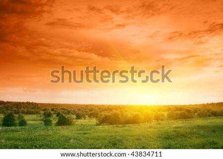 Green field and trees at sunset.