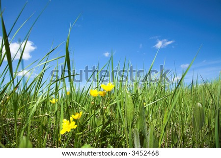 green field and yellow flower against blue sky and white clouds