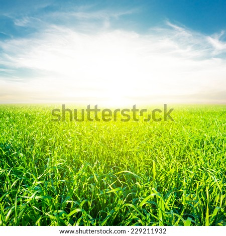 green field at the sunrise - stock photo