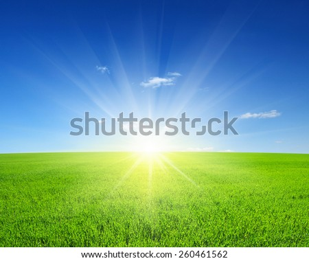 Green field,blue sky and sun.  - stock photo