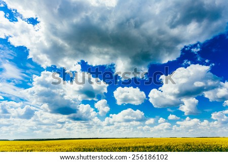 Green Field Blue Sky. Early Summer, Flowering Canola,  Rape, Rapeseed, Oilseed, Biodiesel Crop. Agricultural Background. - stock photo