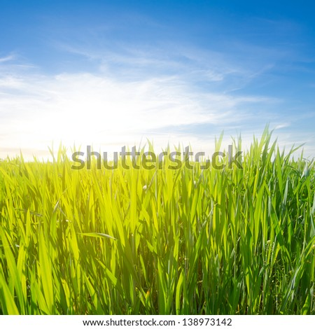 green field in a rays of sun - stock photo