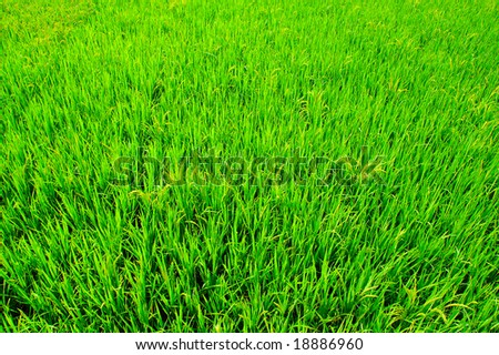 Green field in China - stock photo