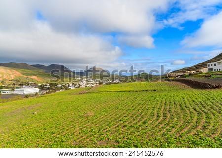 Green field in Haria mountain village, Lanzarote, Canary Islands, Spain  - stock photo