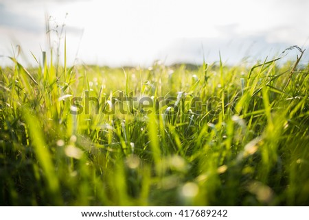 green field in spring sunlight - stock photo