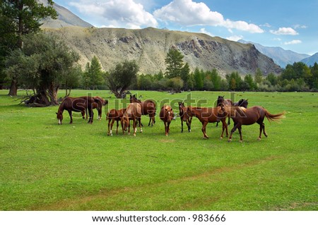 Green field, mountains and horses, Altay - stock photo