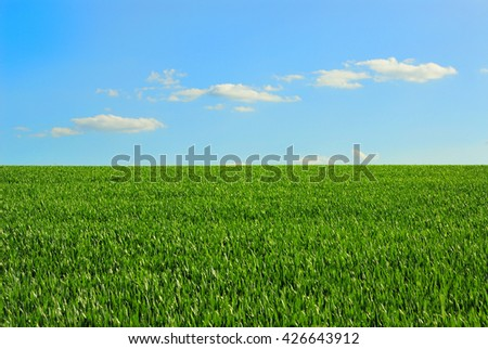 Green field of wheat and blue sky - stock photo