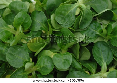 green field salad