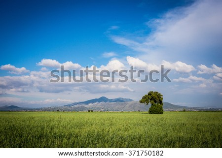 Green field, springtime tree and blue sky - stock photo