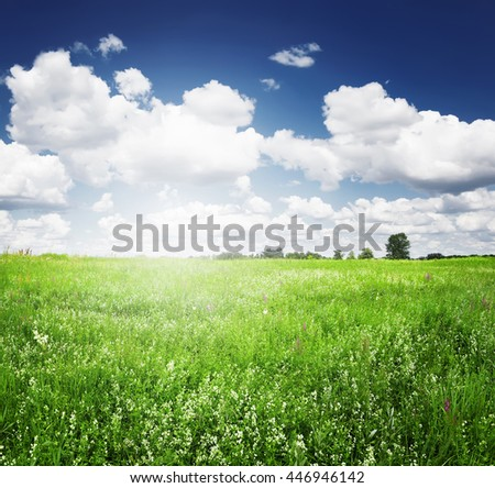 Green field summer