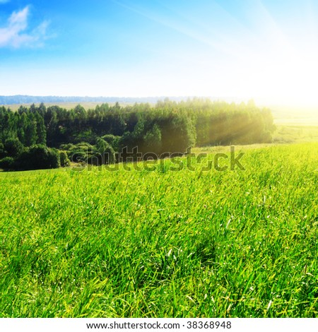 Green field,trees and sun.