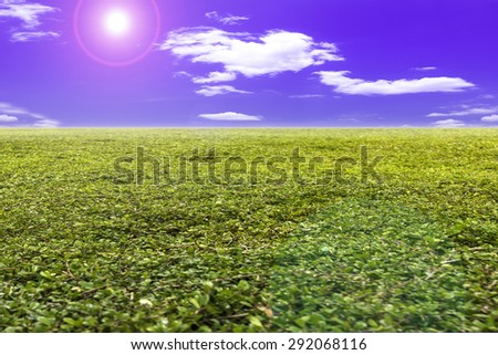 Green field under blue skies. Natural beauty background - stock photo