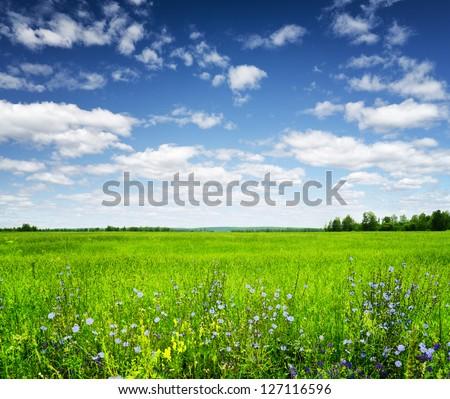 Green field under the blue sky. Summer landscape. - stock photo