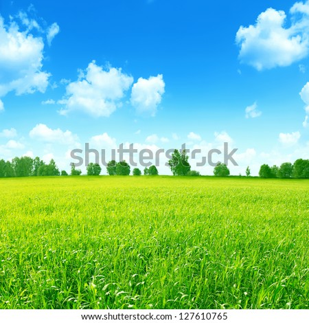 Green field with a row of  trees on horizon and blue sky with clouds.