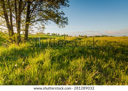 Green field with blue sky and lonely tree - stock photo
