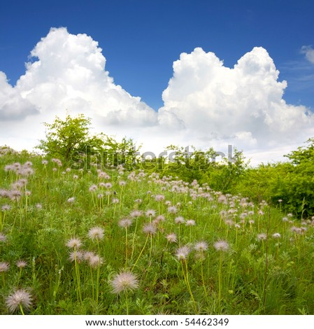 green field with flowers - stock photo
