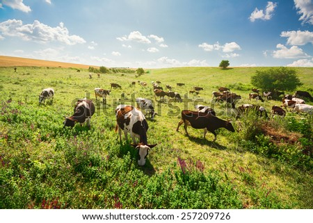 Green field with herd of cows - stock photo