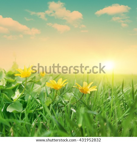 Green field with spring flowers during sunset. - stock photo