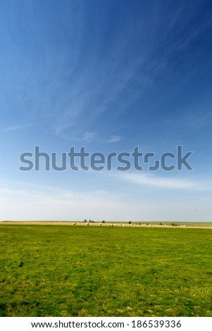 Green field with the sheep - stock photo