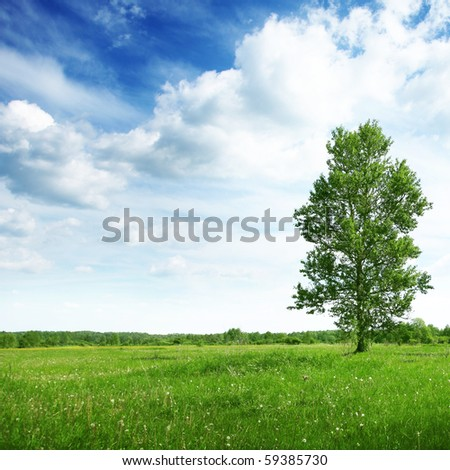 Green field with tree and cloudy sky. - stock photo