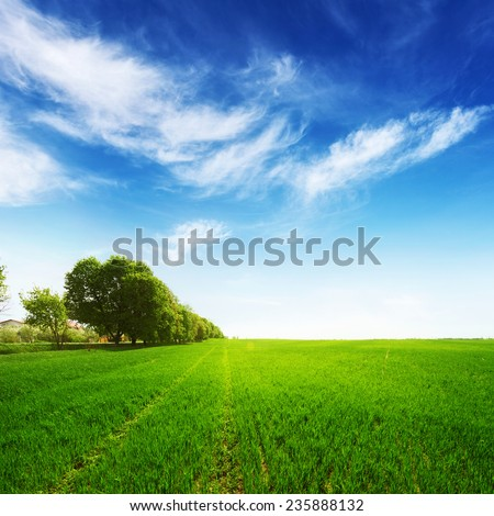 green field with trees and blue sky at summer time - stock photo