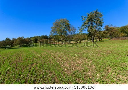 Green field with trees in the distance in countryside of Poland near Krakow