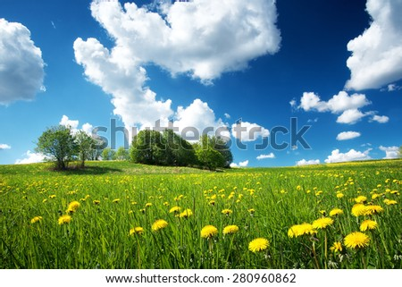 Green field with yellow dandelions and blue sky