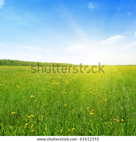 Green field  with yellow flowers,blue sky and sunlight. - stock photo