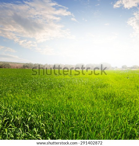 green fields at the morning - stock photo