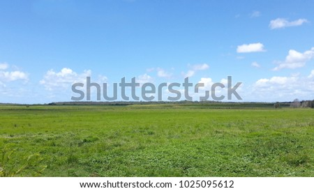 Green Fields in Agriculture District, Queensland Australia