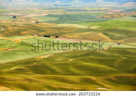 Green fields in Eastern Washington, USA, early summer - stock photo
