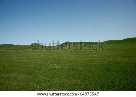 Green fields of rolling New Zealand farmland. - stock photo