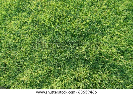 Green fine grass, top view - stock photo