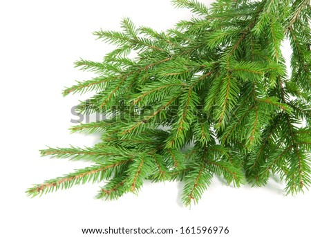 Green fir branches isolated on white background - stock photo