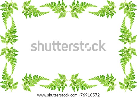 Green flame of the fern leaves