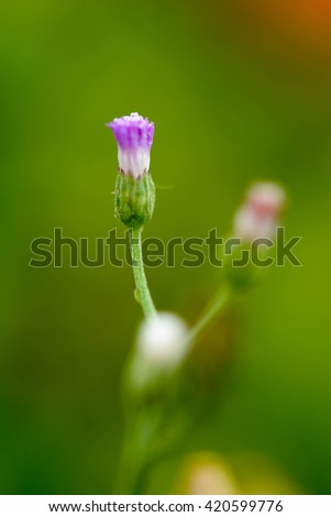 green flower grass on a nature background. Macro image with small depth of field - stock photo
