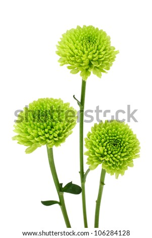 Green flower isolated on white background