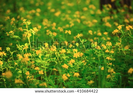 green flowered forest glade - stock photo