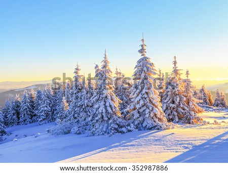 Green fluffy trees covered with snowflakes are far in extremely high mountains in the white meadows on a frosty winter morning. Carpathians. Ukraine - stock photo