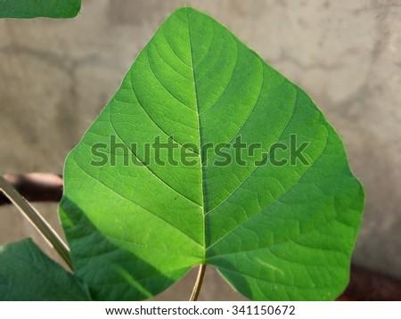 Green foliage isolated - stock photo