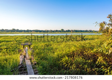 Green foliage of the Amazon rainforest with a lake in the background in Madidi National Park in Bolivia - stock photo