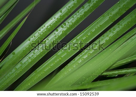 Green foliage with drops of water